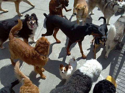 Dog day care dog boarding ace absolute canine experience and were all about the dog we offer a full range of services including dog boarding dog daycare dog grooming and solutioingenieria Image collections