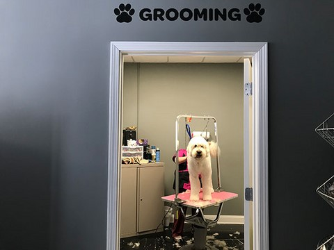Dog Grooming - ACE Absolute Canine Experience